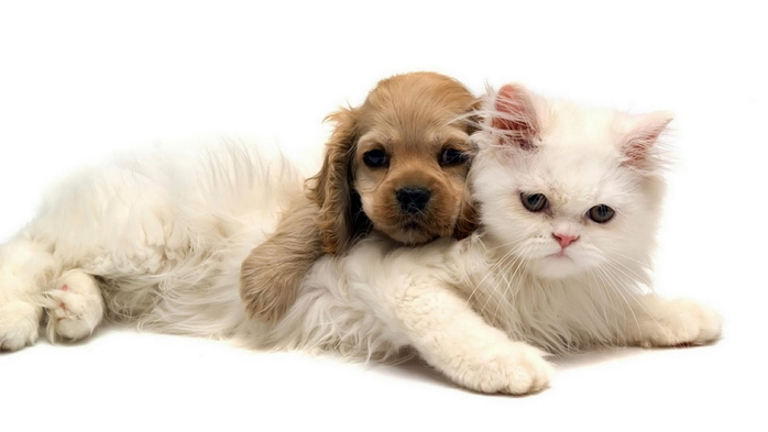 Kitty and Puppy