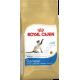 Сиамские кошки (Siamese 38)