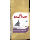 Котята британской короткошерстной (Kitten British Shorthair)