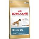 Boxer 26