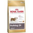 Bulldog 24 Adult