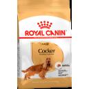 Royal Canin Cocker Dog